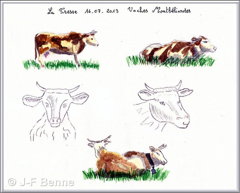 jfb-aq-vaches-et-genisses-01