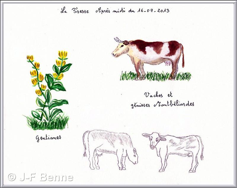 jfb-aq-vaches-et-genisses-02