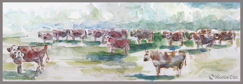 Les vaches de Franche-Comté